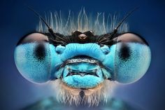 Amazing Macro Insect Photography by Dusan Beno Photos - 001
