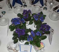 How about these centerpieces? Guest each get to a violet plant home with them after the reception.