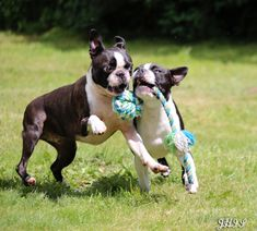 Playing in the Garden! - Lucca and Yodi from Vissenbjerg, Denmark (Photo)