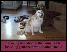 Cleaning with dogs in the house is like brushing your teeth while eating Oreos!