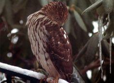 Hawk Again by Scott David, via 500px