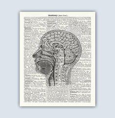 Mammal Skulls Anatomy Poster Mammal Skull Skull by QuantumPrints ...