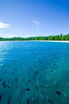 Just you and the fish - nanuya Island resort, via Flickr