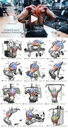 Ultimate back workout plan for massYou can find Muscle building workouts and more on our website.Ultimate back workout plan for mass Fitness Workouts, Weight Training Workouts, Gym Workout Tips, Biceps Workout, Fitness Tips, Traps Workout, Muscle Fitness, Boxing Training, Biceps Training
