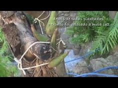 Como preparar um toquinho de madeira para plantar orquídeas - YouTube