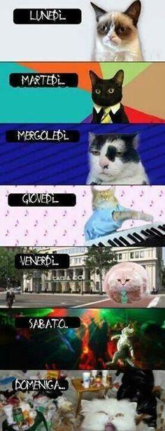 Vita da gatti!