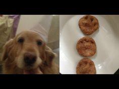 Cuida a tu Mascota - Galletas para perro súper fácil solo 4 Ingredientes! - YouTube