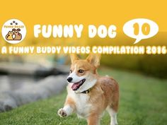 Funny Pets for kid - A funny pets video compilation 2016 10