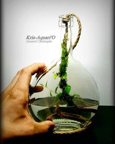 Water Gardens Ideas – Greenest Way Water Terrarium, Aquarium Terrarium, Mini Terrarium, Garden Terrarium, Planted Aquarium, Bonsai Garden, Garden Plants, House Plants, Aquarium Fish