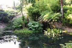 Angielskie Ogrody: Wycieczka Angielskie Ogrody 'KORNWALIA'