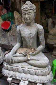 Cat on Buddha's lap