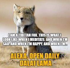 """""""Daily Dalai Lama"""" Alexa skill has 125+ quotes from the Dalai Lama on compassion, kindness, love, happiness and joy. Learn how you can help save Tibet by reading """"Restoring Tibet: Global Action Plan to Send the Dalai Lama Home"""" available on Amazon. #dalailama #tibet #selfhelp #selfimprovement #compassion #lovingkindness #love #happiness #quotes #alexaskills Tibetan Fox, Alexa Skills, Im Sad, Happiness Quotes, Dalai Lama, Im Happy, Self Improvement, Law Of Attraction, Self Help"""