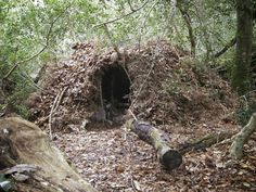 Bushcraft group shelter @Abby Christine Christine Christine Christine Christine Schmidt why is this not in our handbook?!