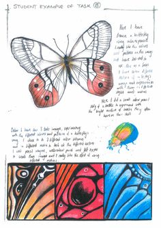 Student Support Booklet - Natural Forms recording page 3 Textiles Sketchbook, Gcse Art Sketchbook, Sketchbook Ideas, Sketchbooks, Natural Form Artists, Natural Forms Gcse, Art Alevel, Observational Drawing, Butterfly Drawing