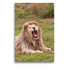 Artworks, Lion, Puzzle, Portraits, Wall Art, Animals, Color, Canvas, Cats
