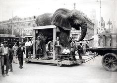 Traslado al museo de Historia Natural del elefante cazado por el duque de Alba .Octubre 1930 (Alfonso)