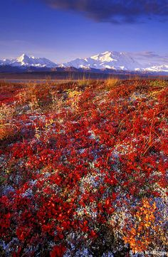 Denali National Park, Alaska.  I cannot wait to take my son there.  This place changed my life and I hope it will do the same for him.