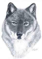 Graphite Drawings - Spirit Guide  by Joette Snyder