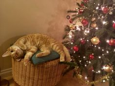 Chillin' by the tree