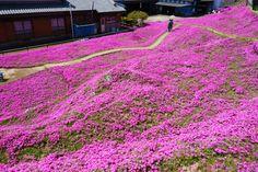 kuroki-san's beautiful garden planted for his sightless wife  photo by machiyakuba shintomi
