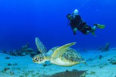 Hurghada Diving Padi course, Enjoy the Best Prices Day Trips from Diving Center in Hurghada Excursions, Marsa Alam EL Gouna, Safaga, Top Dive Sites Red Sea Guy Fawkes, Snorkeling, Snowboard, Beagle, Diving World, Surf, Koh Tao, Boat Tours, Vietnam Travel