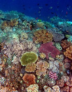 20,000 year-old coral reef in the Gulf of California