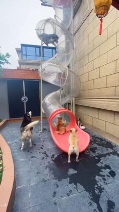 What a joyous time! Funny Animal Videos, Cute Funny Animals, Cute Baby Animals, Funny Dogs, Cute Dogs, Big Dog Beds, Big Dogs, Puppy Playground, Indoor Dog Park