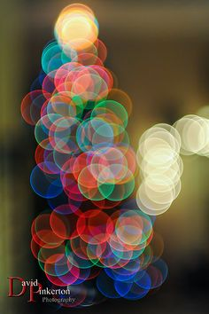 Defocused Christmas Tree - David Pinkerton