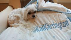 His Blankie #kaikarrington