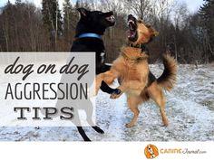 Sad Dog Stories, Aggressive Dog, Happy Dogs, Funny, Tips, Animals, Animales, Advice, Animaux