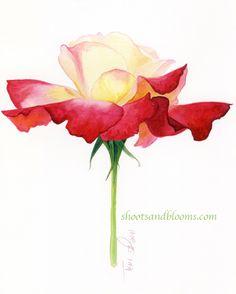 Double Delight Rose by Teri Farrell-Gittins