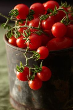 Yes, tomato berries. And did you know that tomatoes are fruit. Fruit And Veg, Fresh Fruit, Fresh Cherry, Cherry Red, Fruits And Veggies, Fruits And Vegetables, Tomate Grappe, Tomato Garden, Tomato Vine