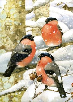 Robin Bird Illustration Marjolein Bastin Ideas For 2019 Art And Illustration, Watercolor Bird, Watercolor Paintings, Watercolors, Marjolein Bastin, Drawn Art, Nature Artists, Dutch Artists, Illustrator