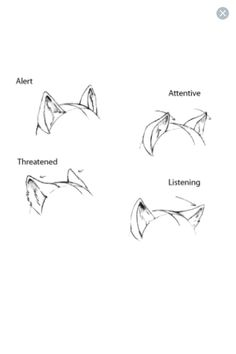 Ear expressions #CatDrawing