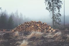 Photo By Jonas Nilsson