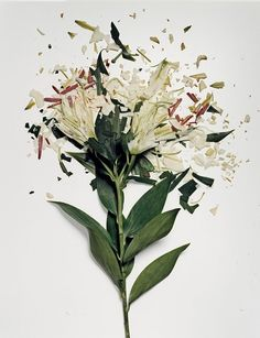 Flowers soaked in liquid nitrogen and shattered on impact by Jon Shireman