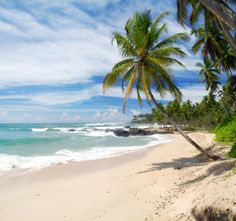 Picture of Tropical paradise in Sri Lanka, Tangalle with palms hanging over the beach and turquoise sea stock photo, images and stock photography. Sri Lanka Plage, Le Sri Lanka, Maldives, Orlando, Athens City, Destinations, Next Holiday, Ocean Photography, Tropical Paradise