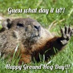 #groundhogday #love #bestoftheday #instagood #follow #picoftheday #happy #photooftheday #likes #igers #instadaily #photofy @photofyapp