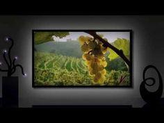 Une chaîne TV sur le monde du vin
