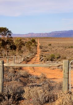 ♥ Outback Track ~ South Australia I have a fascination with Australia I have a friend who lives in Perth.Don't fly so I will never see Australia Outback Australia, South Australia, Western Australia, Australia Travel, Australia Photos, Melbourne Australia, Australia Landscape, Australian Cattle Dog, Roadtrip