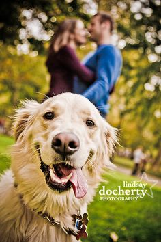 Engagement session with Golden Retriever | www.lindsaydocherty.com | Philadelphia engagement photographer