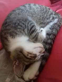 Photo de chaton 😀