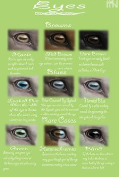Equine Eyes by EdithSparrow on DeviantArt Next up 'Genetics Chart' EDIT: Added a whole bunch of stuff! Im really glad with the response ive had from this, eveyone is so friendly and eager to learn! Thanks guys, you make me so ha… Horse Riding Tips, Horse Tips, Pretty Horses, Beautiful Horses, Horse Color Chart, Colour Chart, Arte Equina, Horse Coat Colors, Horse Markings