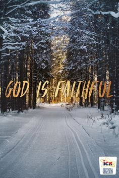 """When we place our trust in Jesus Christ as omnipotent Creator and gracious Redeemer, He then faithfully undertakes to provide everything we need to live an effective, fruitful, victorious Christian life.  Read today's #DaysOfPraise devotional """"God Is Faithful"""" here: https://www.icr.org/article/10313/"""