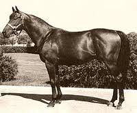 Citation (1945-1970) was the 8th American Triple Crown winner, & one of 3 major North American Thoroughbreds (along with Cigar and Zenyatta) to win at least 16 consecutive races in major stakes race competition. He was the 1st horse in history to win one million dollars. Owned & bred by Calumet Farm in Lexington, KY, Citation was a bay colt by Bull Lea from imported mare Hydroplane (GB), who was by the leading sire Hyperion. Although Citation was bred in KY, his pedigree was largely European
