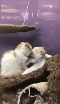 GIF My cats love each other