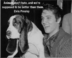 "Elvis Presley - ""Animals don't hate, and we're supposed to be better than them."" #animal #quotes #love"