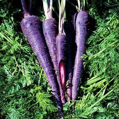 carrot purple haze