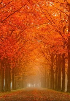 Uploaded by October. Find images and videos about nature, autumn and landscape on We Heart It - the app to get lost in what you love. Beautiful World, Beautiful Places, Autumn Scenes, Autumn Aesthetic, Colorful Trees, Fall Pictures, Beautiful Landscapes, Autumn Leaves, Nature Photography