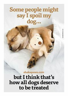 """""""Some people might say I spoil my dog...but I think that's how all dogs deserve to be treated."""""""